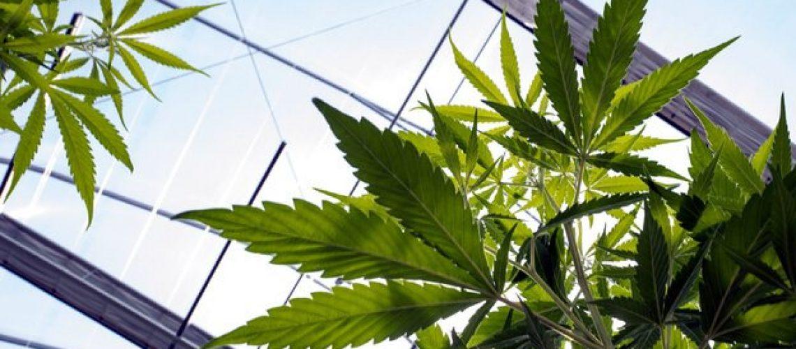 The_latest_on_Utah_s_medical_cannabis_ba_0_49060854_ver1.0_640_360
